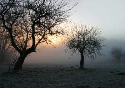 mystischer_morgennebel_im_bayerischen_wald